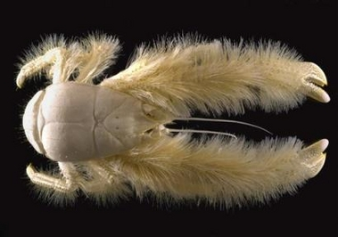 Crusty Crustacean